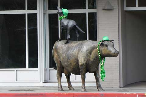 St.-Patricks-Day-Cow-&-Coyote.jpg