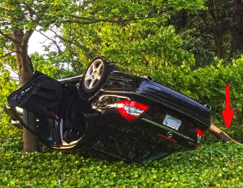 Crime Scene: Reckless driver injures helpless tree in Kirkland.