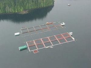 Source: http://www.farmedanddangerous.org/salmon-farming-problems/