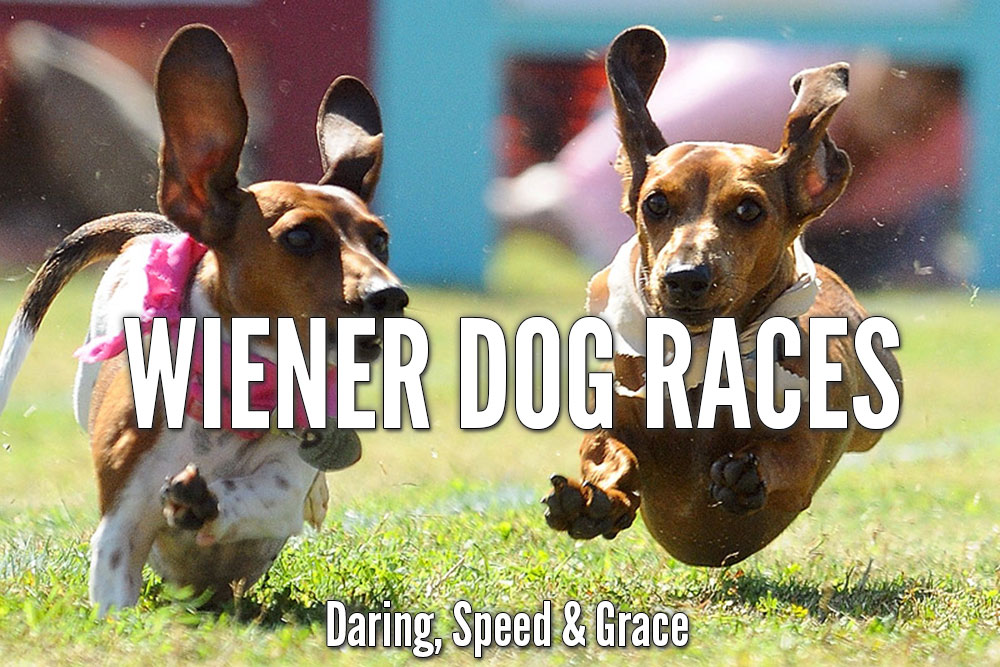 Wiener Dogs Races: Sunday at 1pm. All-ages, FREE