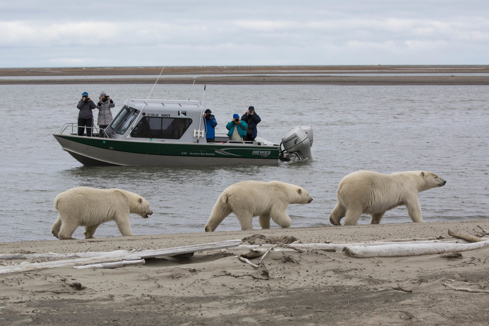 Nanuq boat (Photo Hugh Rose)