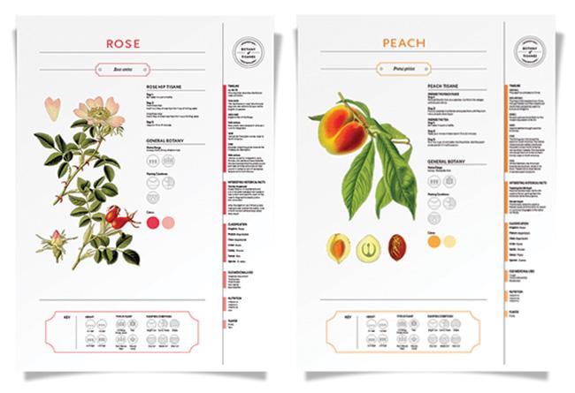 botany-of-tisanes_posters1.jpg