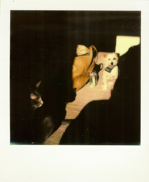 Polaroid_SSWEB_600px_04.jpg