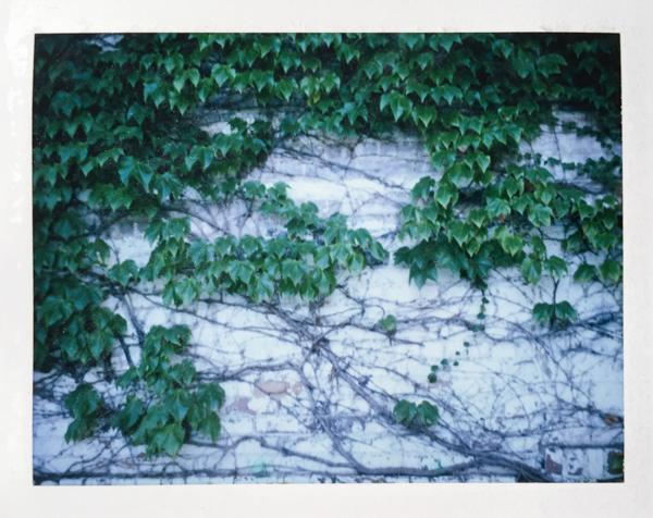 Polaroid_SSWEB_600px_07.jpg