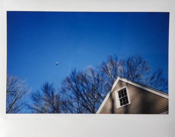 Polaroid_SSWEB_600px_43.jpg
