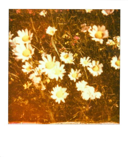 Polaroid_SSWEB_600px_42.jpg