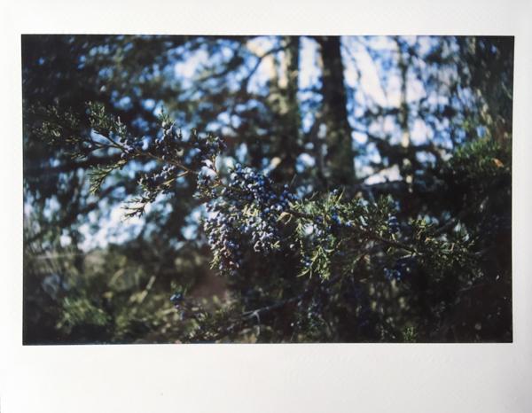 Polaroid_SSWEB_600px_66.jpg