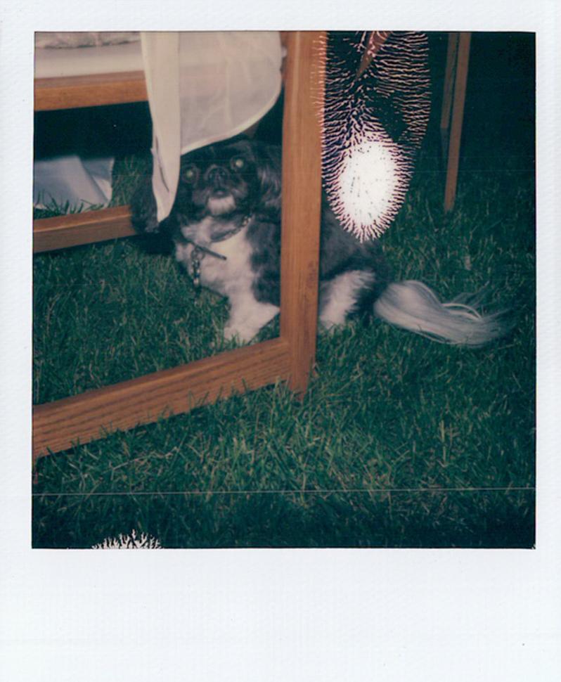 191_041_Danielle+Alex_L+W_Polaroids_SS_NOWM.jpg