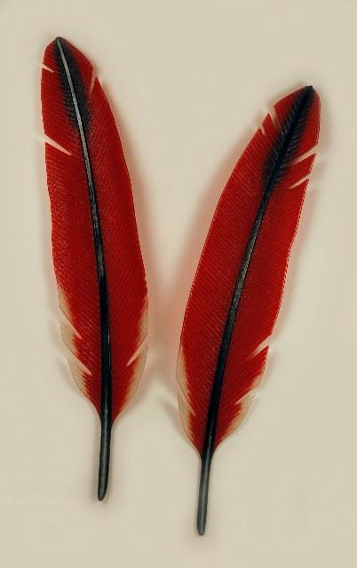 """Cardinal Feathers 17"""" x 28"""""""