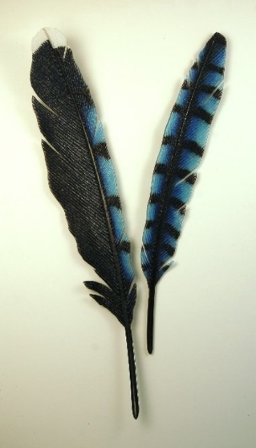 "Bluejay Feathers  20"" x 42"""