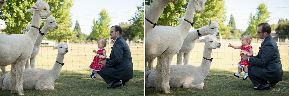 Alpaca_Wedding0050.jpg