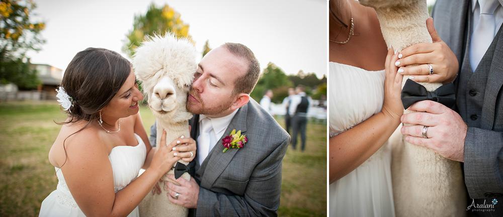 Alpaca_Wedding0053.jpg