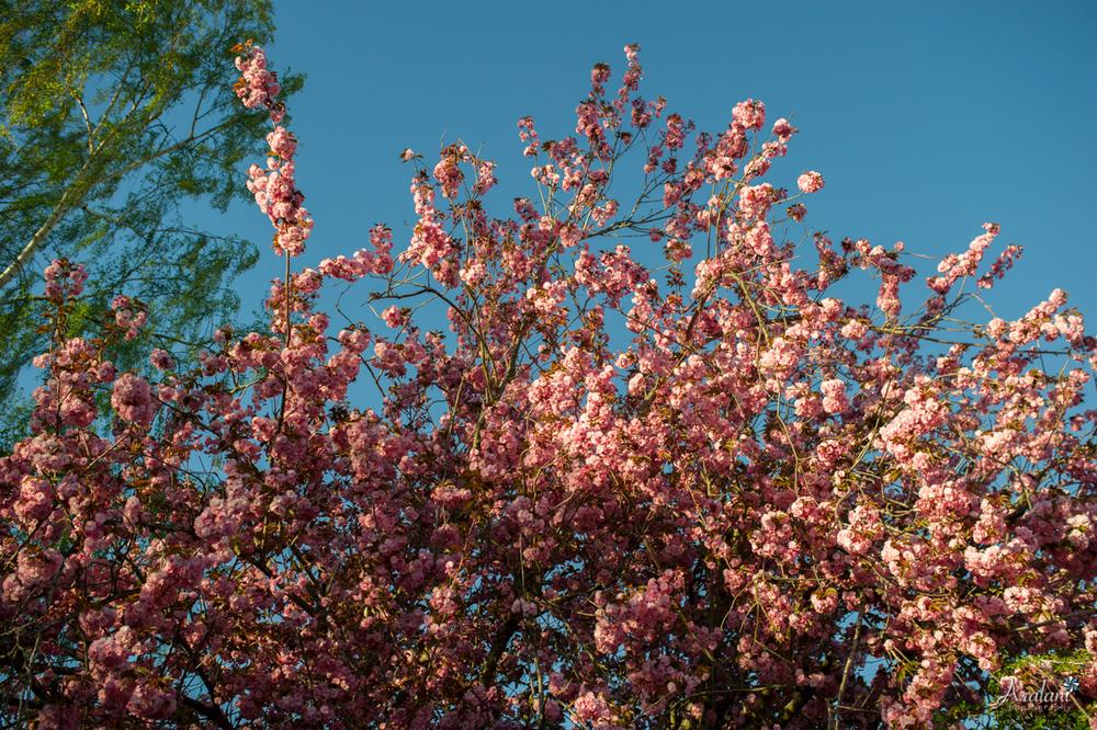 Spring_in_Portland001.jpg