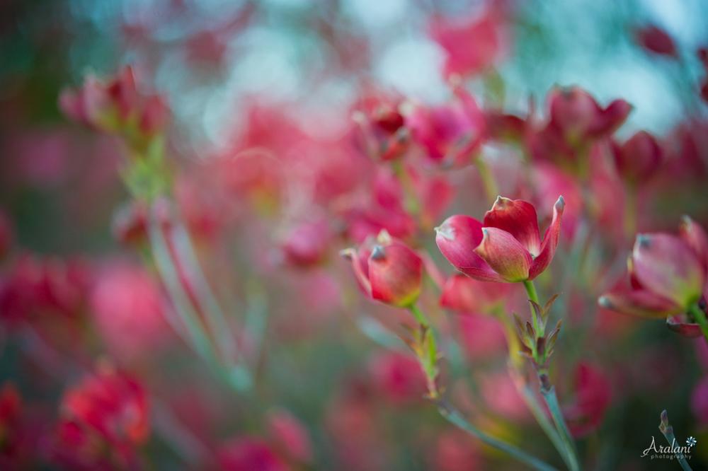 Spring_in_Portland005.jpg