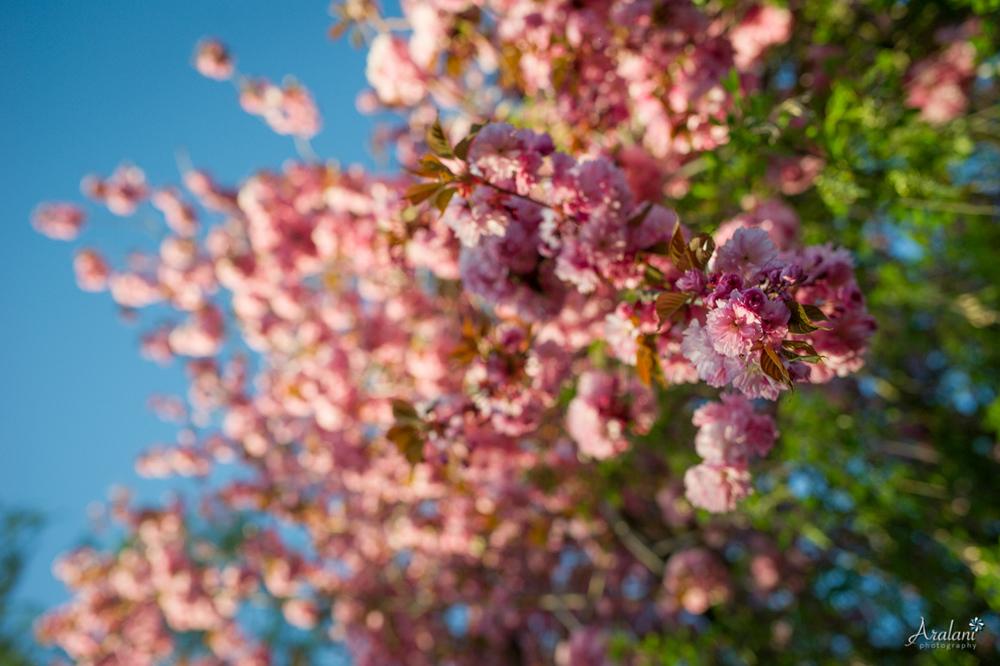 Spring_in_Portland004.jpg