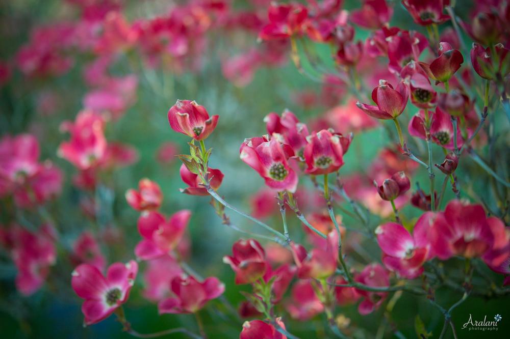 Spring_in_Portland006.jpg