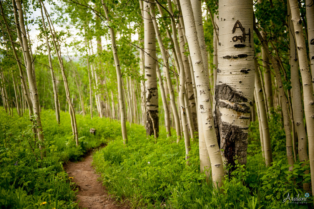The Berry Picker Trail - Vail, Colorado