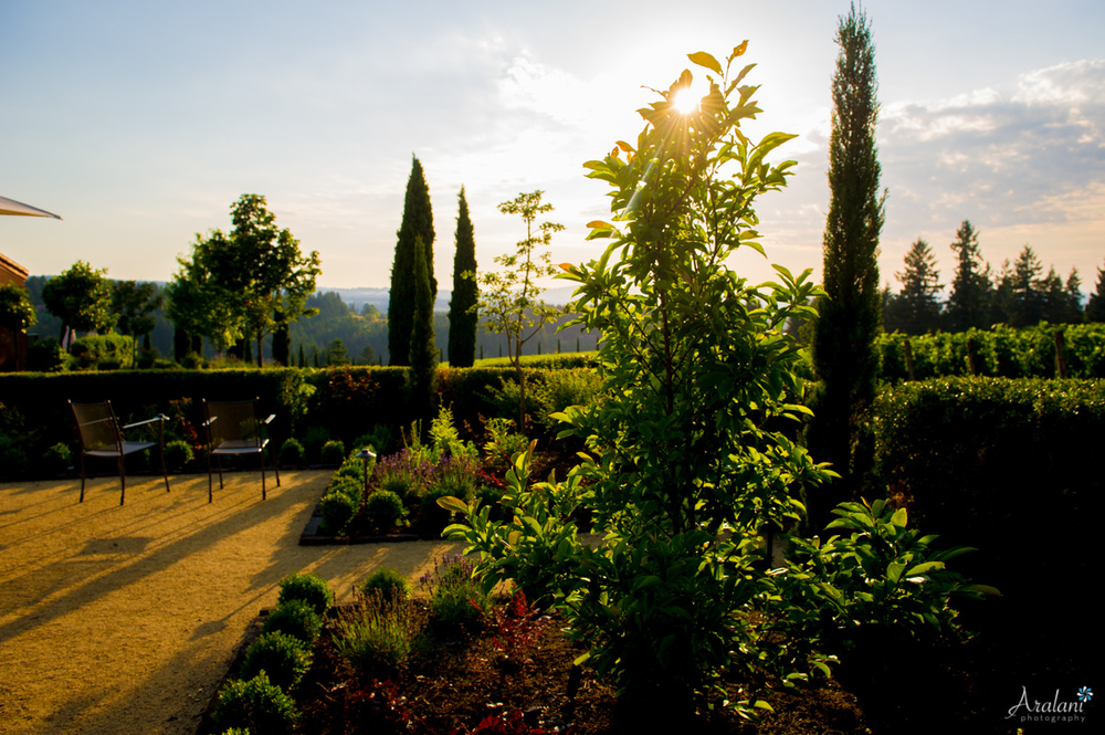 Alloro_Vinyard_Wedding0031.jpg
