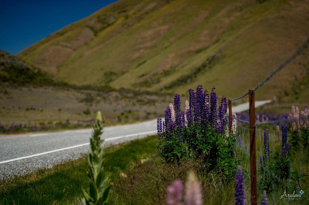 New_Zealand_Roadtrip_0024.jpg