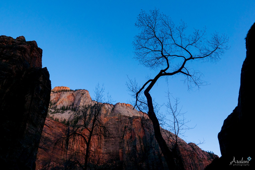 Zion_Canyoneering_Adventure006.jpg