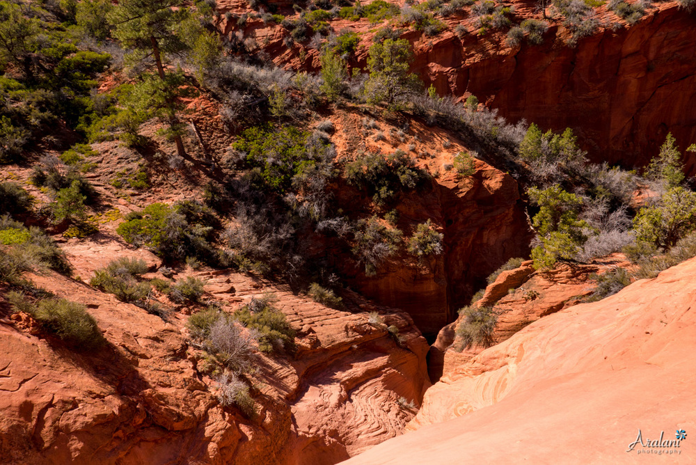 Zion_Canyoneering_Adventure009.jpg