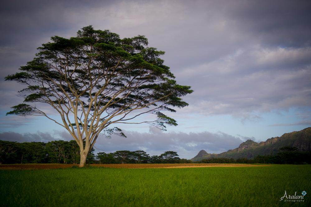 Kauai_Trip_Report0002.jpg