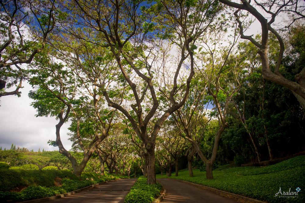 Kauai_Trip_Report0010.jpg