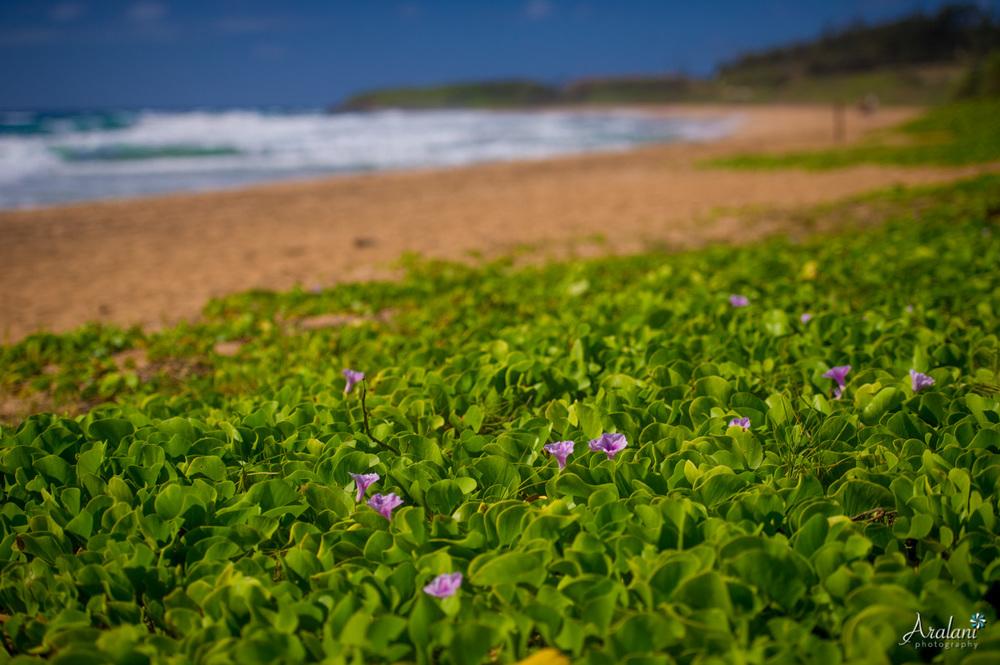 Kauai_Trip_Report0011.jpg