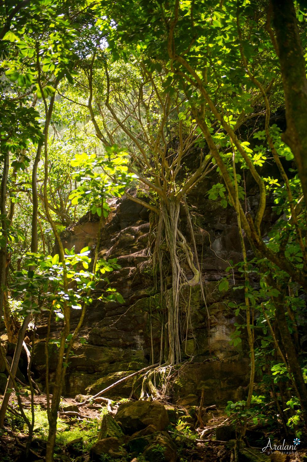 Kauai_Trip_Report0013.jpg