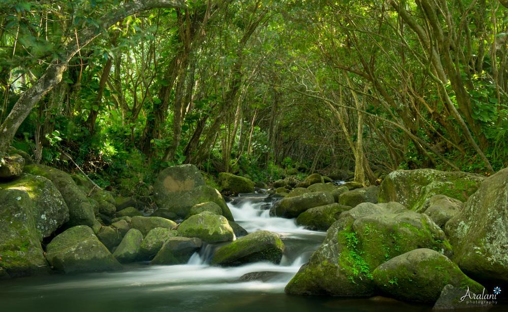 Kauai_Trip_Report0021.jpg