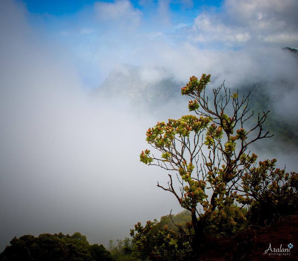 Kauai_Trip_Report0027.jpg