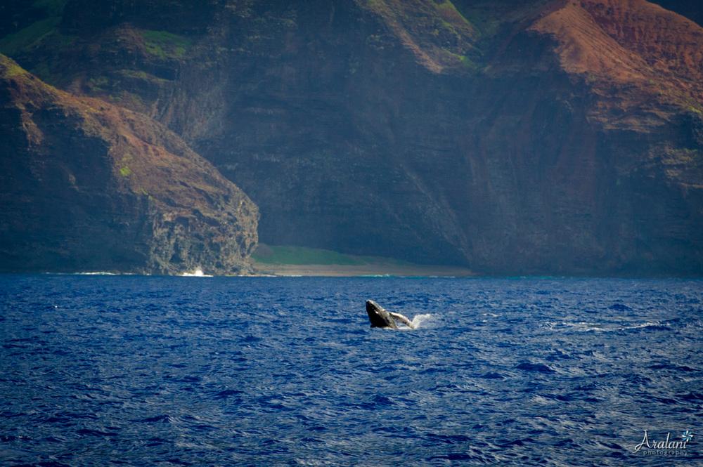 Kauai_Trip_Report0036.jpg