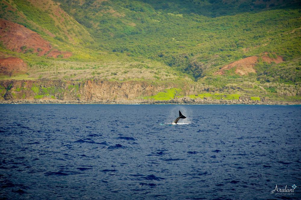Kauai_Trip_Report0037.jpg