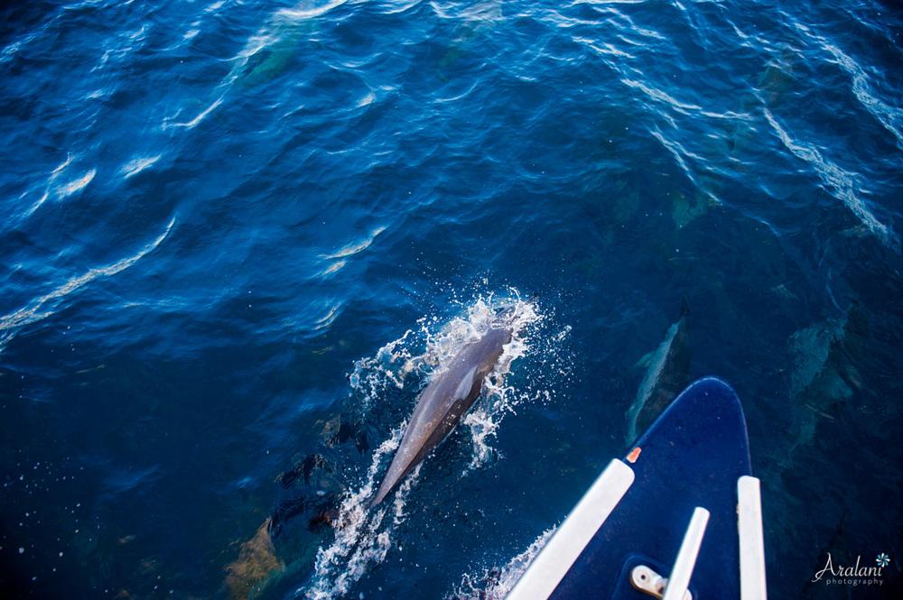 Kauai_Trip_Report0041.jpg