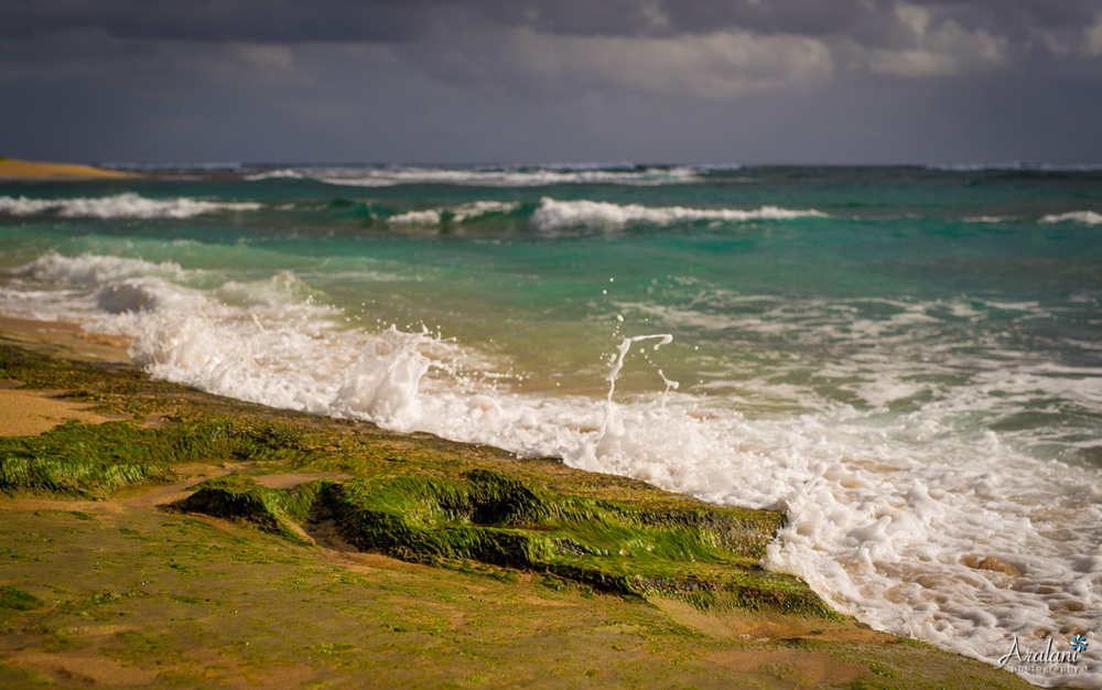 Kauai_Trip_Report0056.jpg