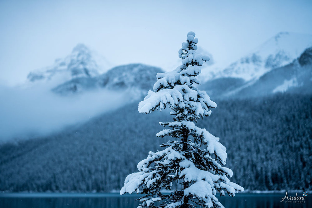 Banff011.jpg