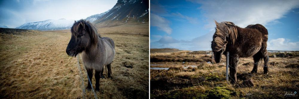 Iceland_Aralani0030.jpg