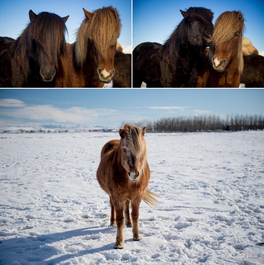 Iceland_Aralani0081.jpg