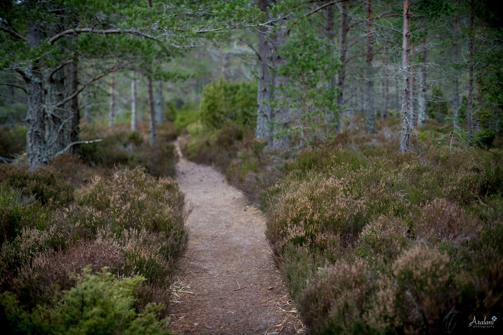 Aralani_Scotland_0068.jpg