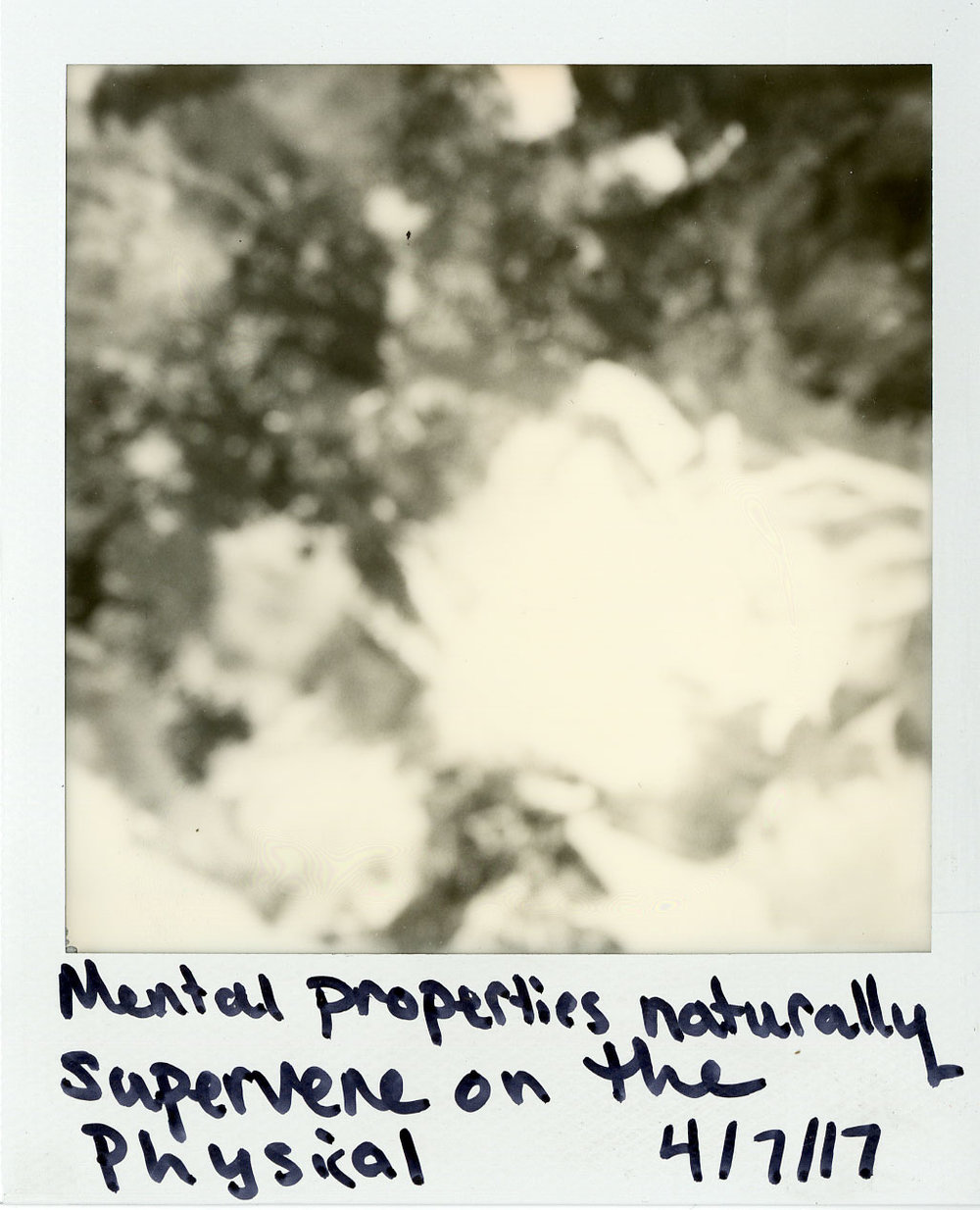 Darkroom-Polaroids023.jpg