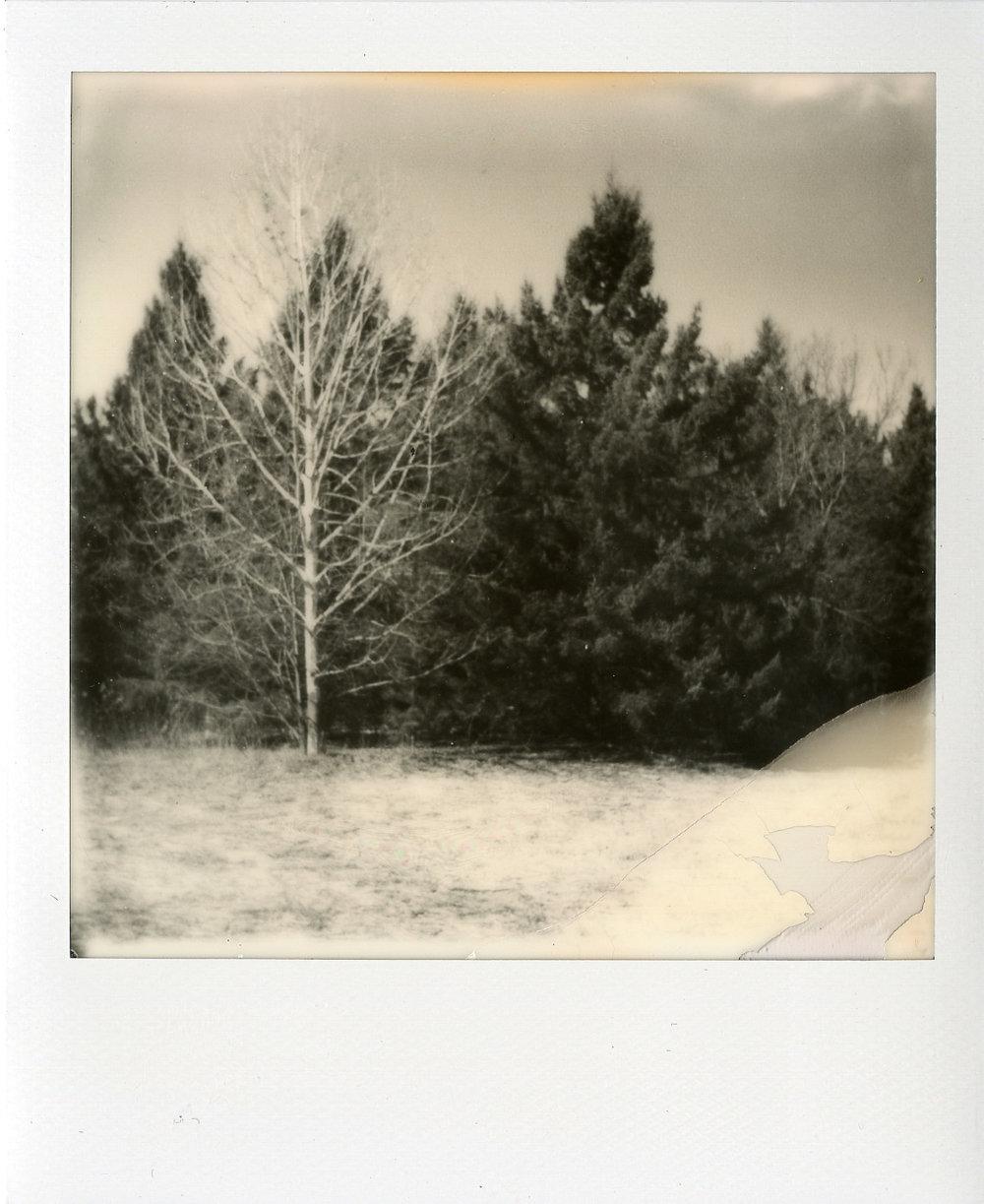 Darkroom Polaroids005.jpg