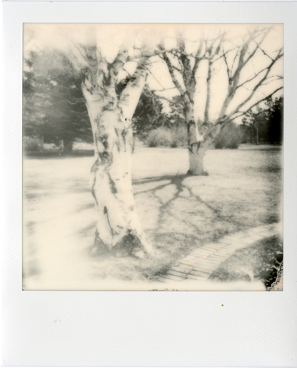 Darkroom Polaroids007.jpg