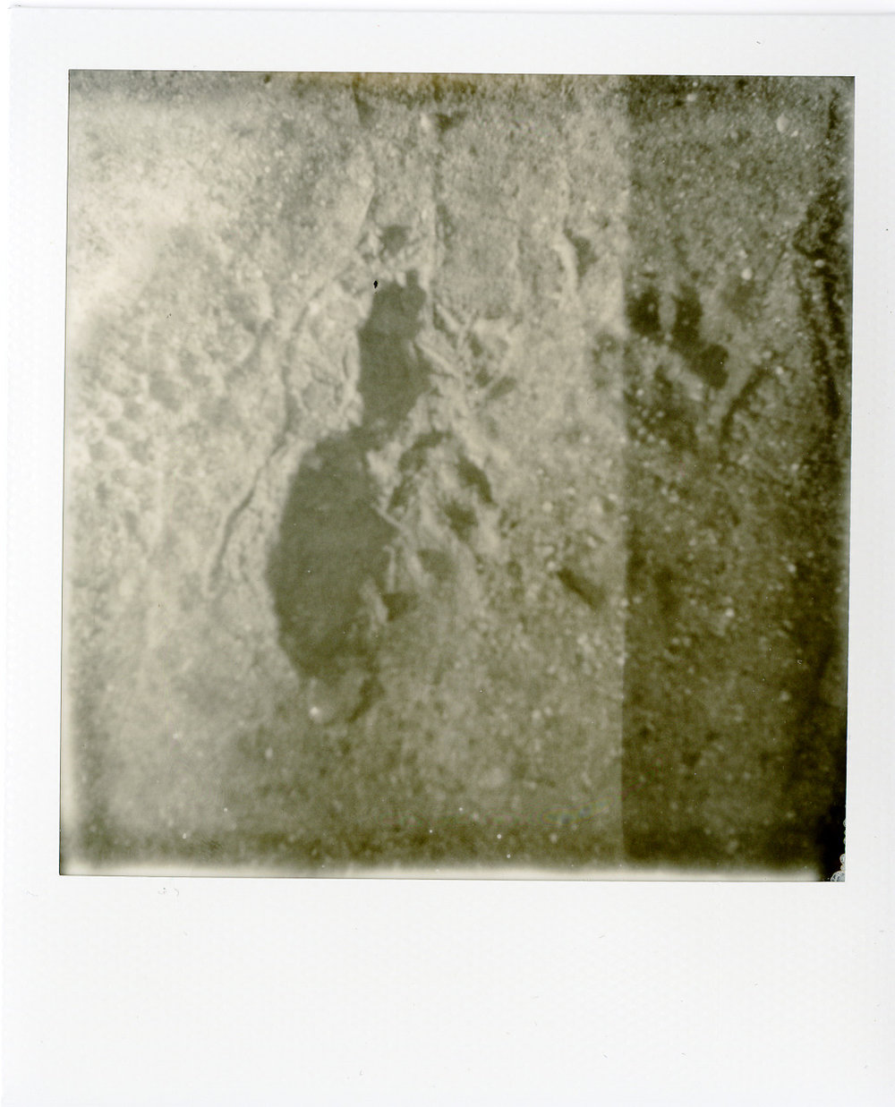 Darkroom Polaroids008.jpg
