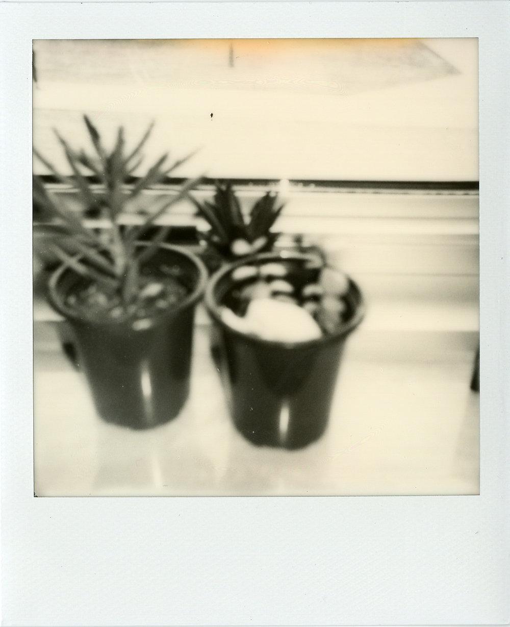 Polaroids040.jpg
