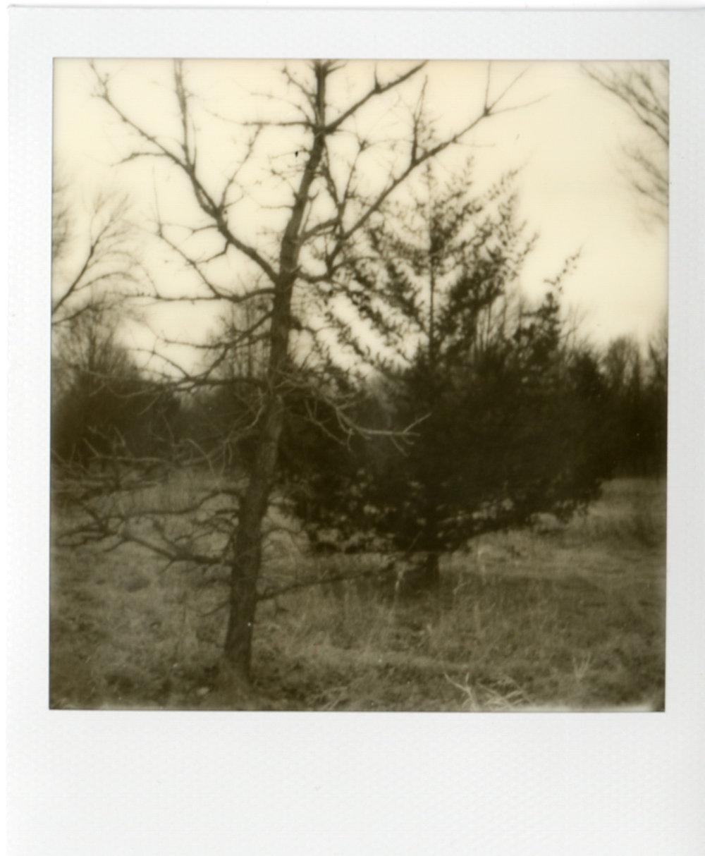 Polaroid056.jpg