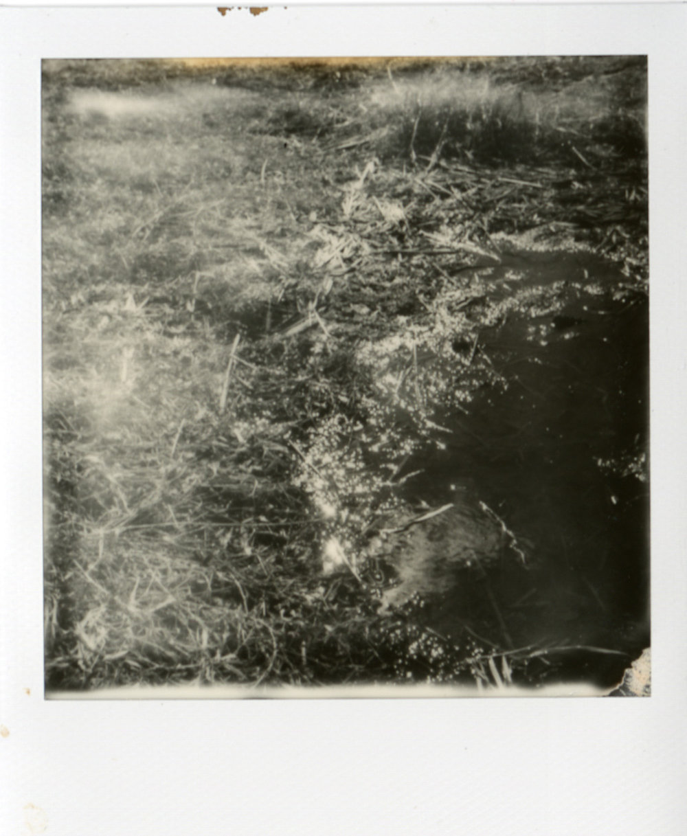 Polaroid061.jpg