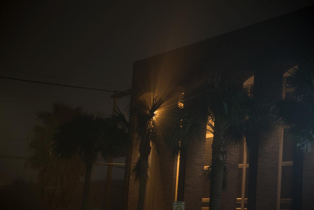palm_light_web.jpg