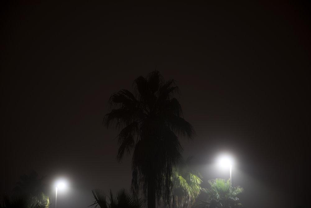 shadow_palm_web.jpg