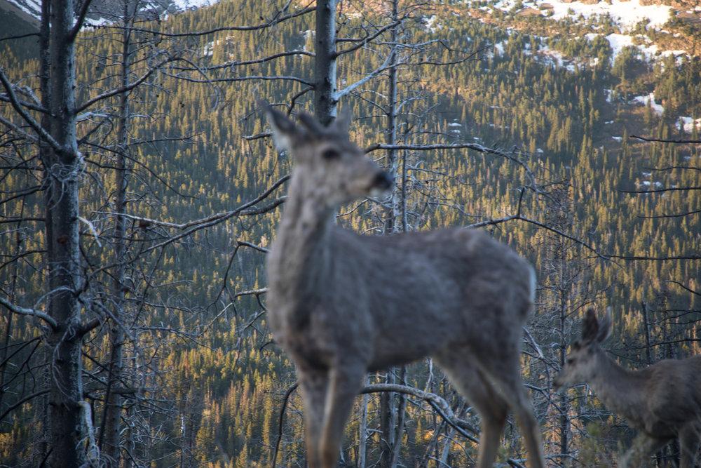 fuzzy-elk_web.jpg