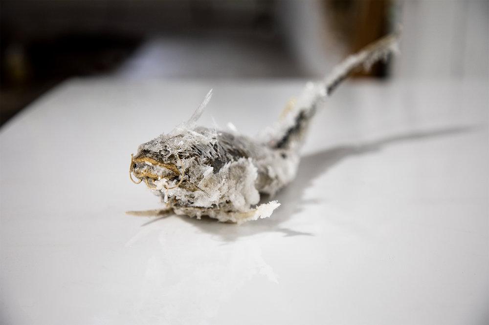 Salty-Fish.jpg